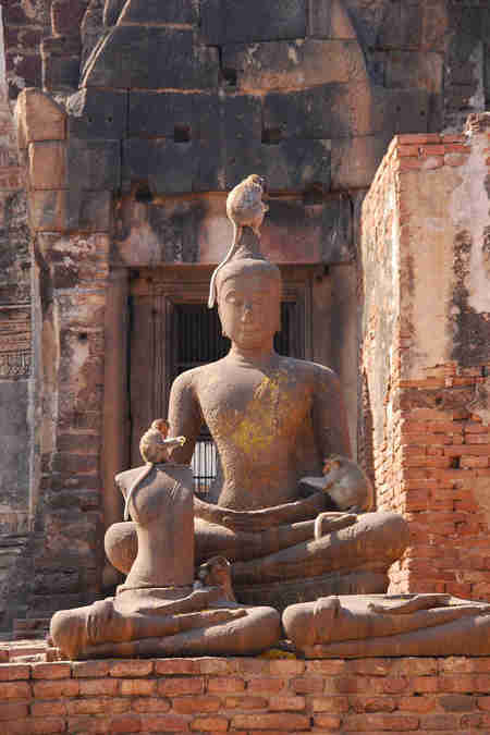 monkeys with buddha