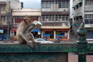 monkey juice box