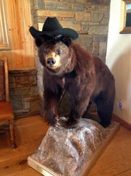 Taxidermied bear with cowboy hat