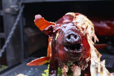 pig torn