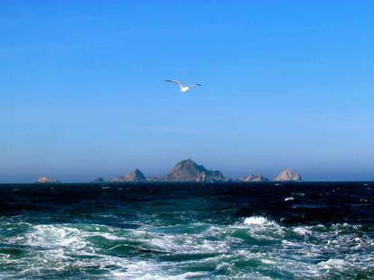 Farallon Islands SF