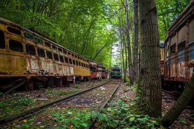 trains forest
