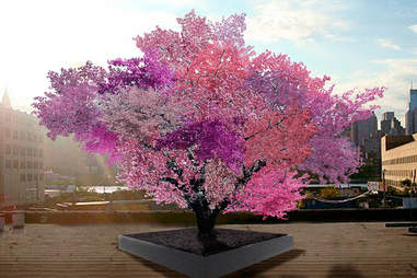 The tree of 40 fruits