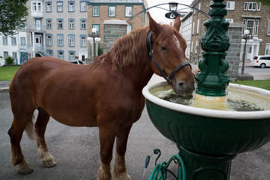Horse drinking from fountain