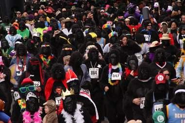 denver-gorilla-run-Thrillist