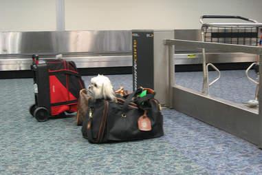 Dog in Bag