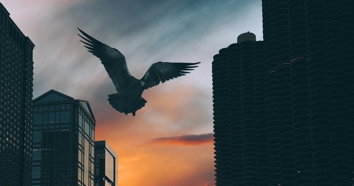 Best Chicago Instagram - Thrillist