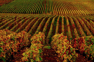 NY State Vineyards