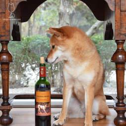 Shiba Sommelier Faithful Hound
