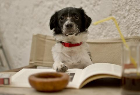 Dog with book and coffee