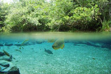 Rio da Prata, Brazil clear waters