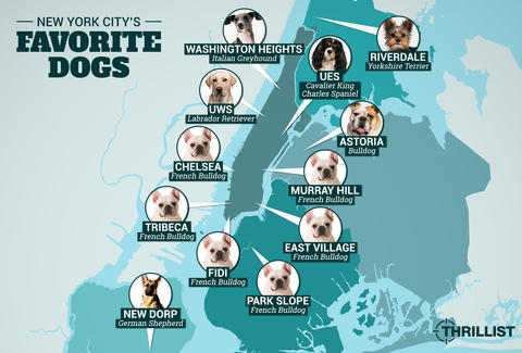 Cartoon Map Of New York City.Here S A Map Showing Nyc S Most Popular Dog Breeds By Neighborhood
