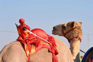 Camel robot