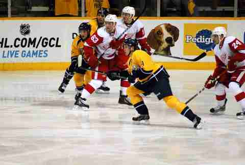 Predators hockey
