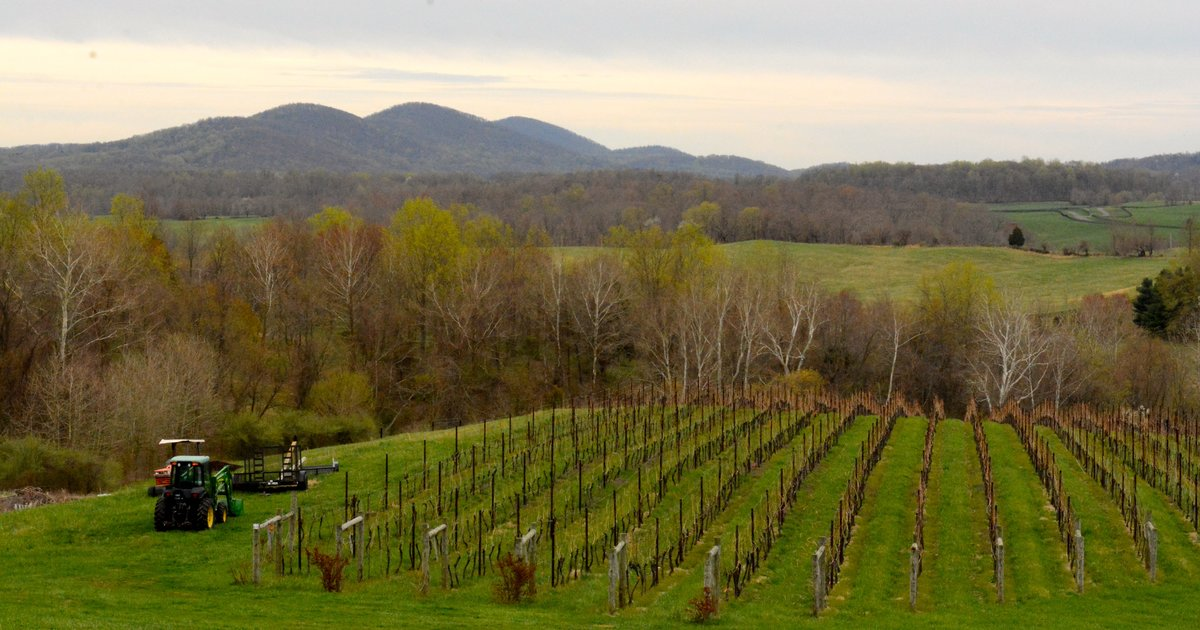 8 Virginia Wineries Worth the Trip From DC