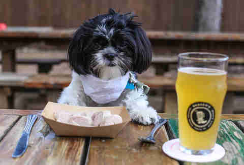 dog with beer
