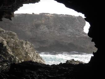 animal flower cave barbados