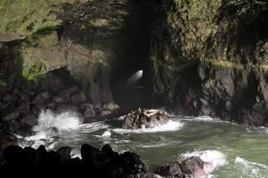 sea lion caves oregon