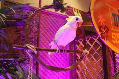 Disneyland Tiki Room animatronic bird
