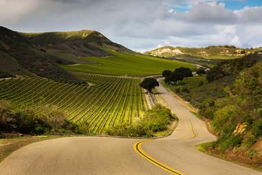 Road winding through vineyards