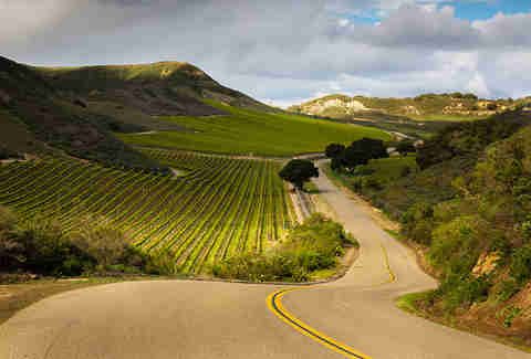 Road winding through vineyards