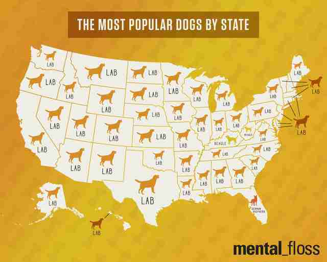 What Is The Most Common Breed Of Dog Per State