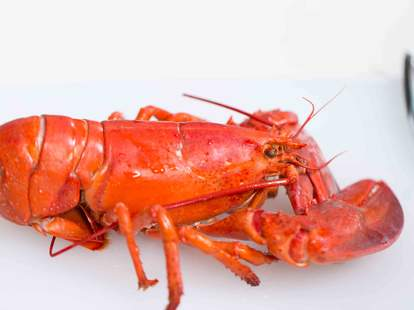 How to Cook Lobster — Thrillist Recipes