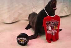 Watch Animals Celebrate the Blackhawks Victory Just Like Humans