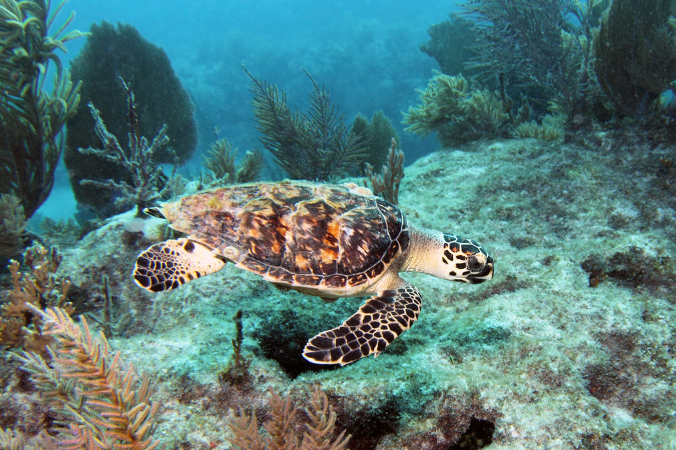 12 Best Places To Scuba Dive In Florida
