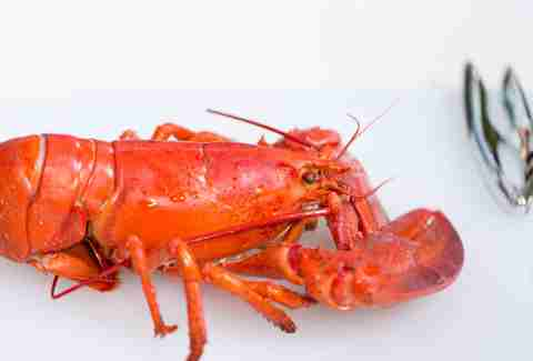 How to cook lobster -- Thrillist Recipes