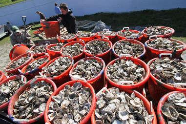 Barrels of oysters