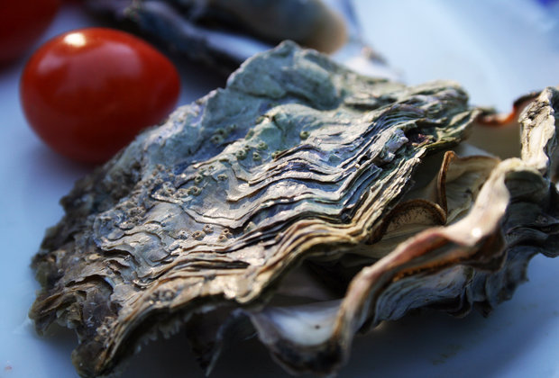 14 Reasons Why Oyster Farmers Are the Most Badass Type of Farmers