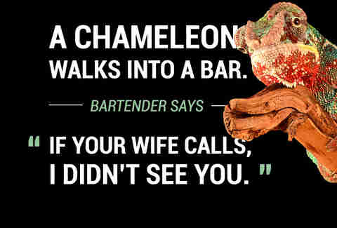Chameleon Walks Into A Bar Joke