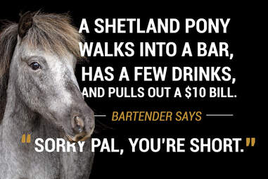 Pony walks into a bar