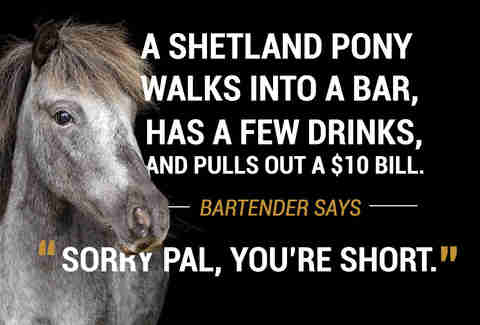 Pony walks into a bar