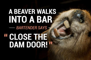 Beaver walks into a bar