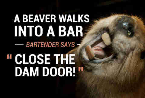 Beaver walks into a bar