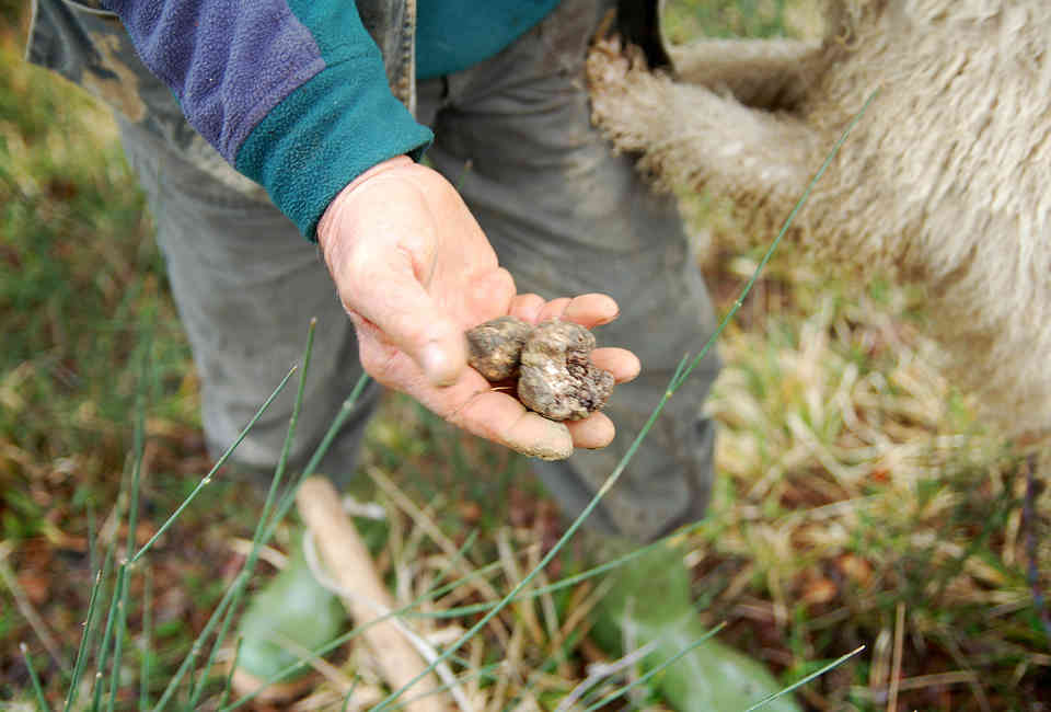 17 Things You Didn't Know About Truffle Foraging - Thrillist