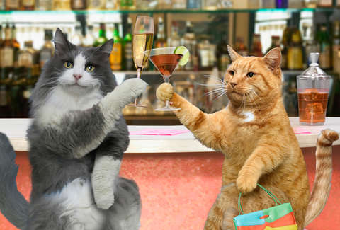 Two cats walk into a bar