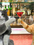 Cats Drinking!