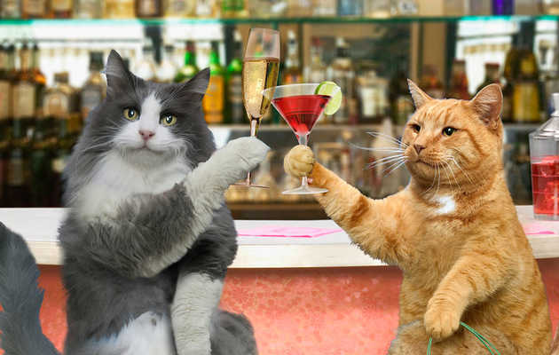 "38 New ""Animal Walks Into A Bar"" Jokes, Because Puns Are Awesome"