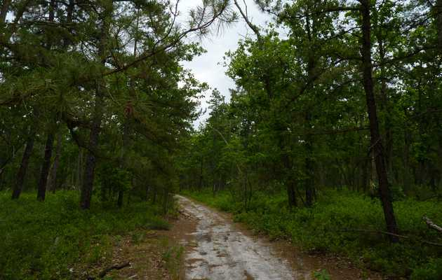What I Miss Most From Home: Summer Rain in the Jersey Pine Barrens