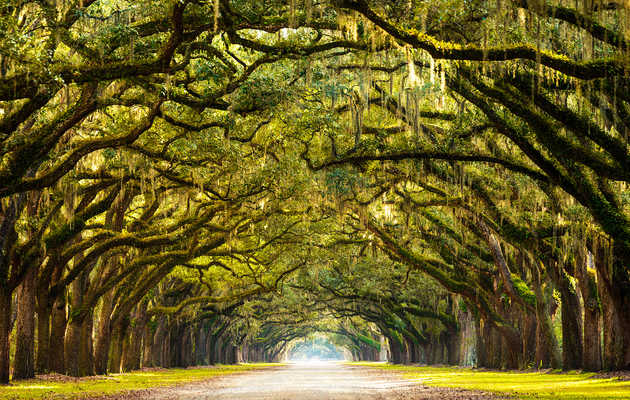 12 Things You Didn't Know About Savannah