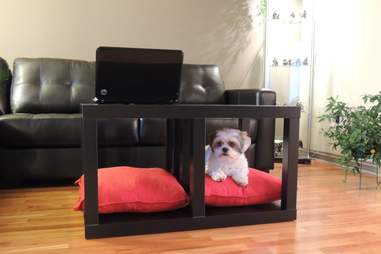 dog coffee table IKEA