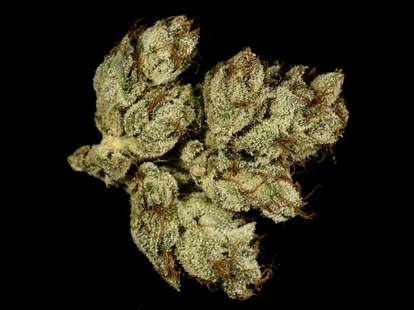closeup of OG Kush cannabis strain
