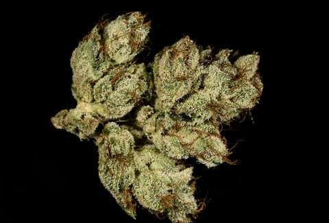 closeup of OG Kush cannabis strain