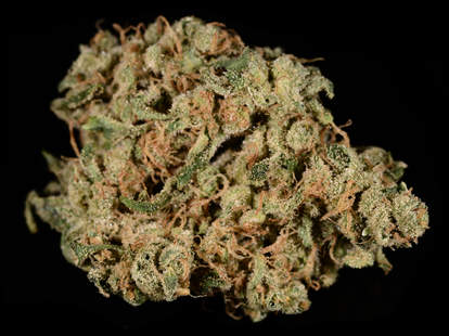 closeup of Durban Poison cannabis strain