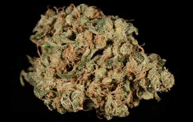 Everything You Need to Know About the Durban Poison Weed Strain