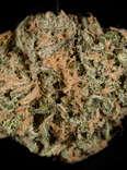 blue dream cannabis strain, closeup of marijuana bud