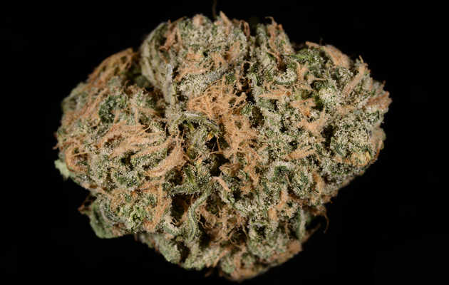 Everything You Need to Know About the Blue Dream Weed Strain